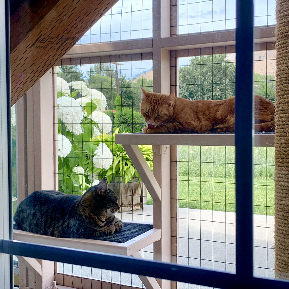 Cats in the Catio