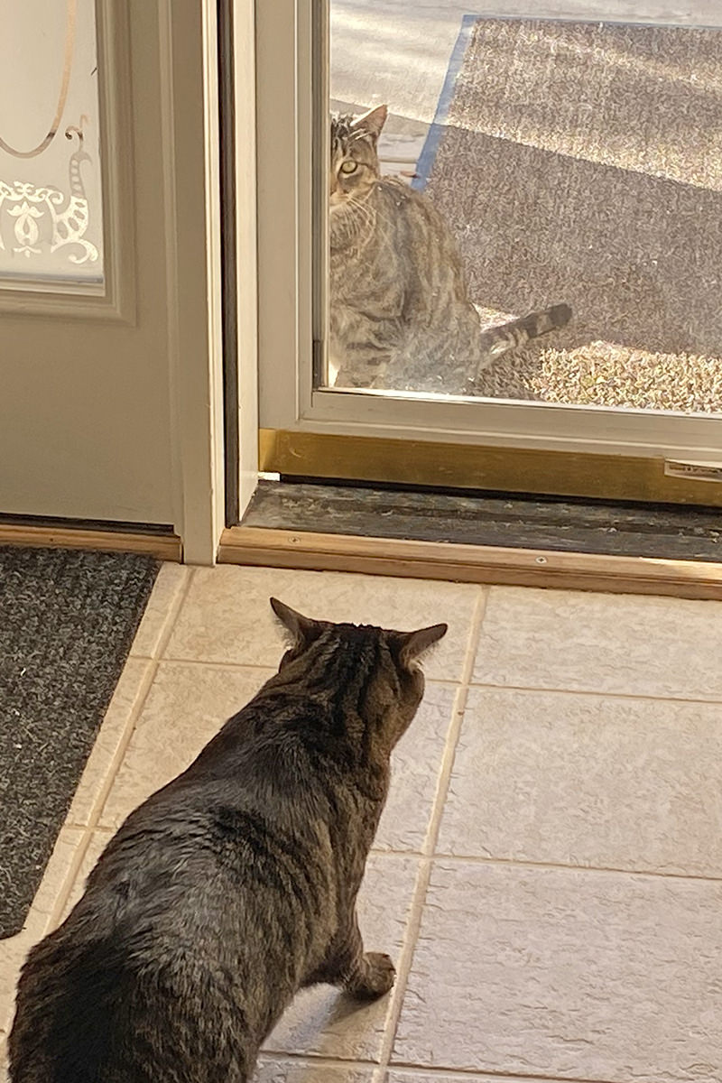 Jake sneaking up to the front screen door to visit with Fake Jake.