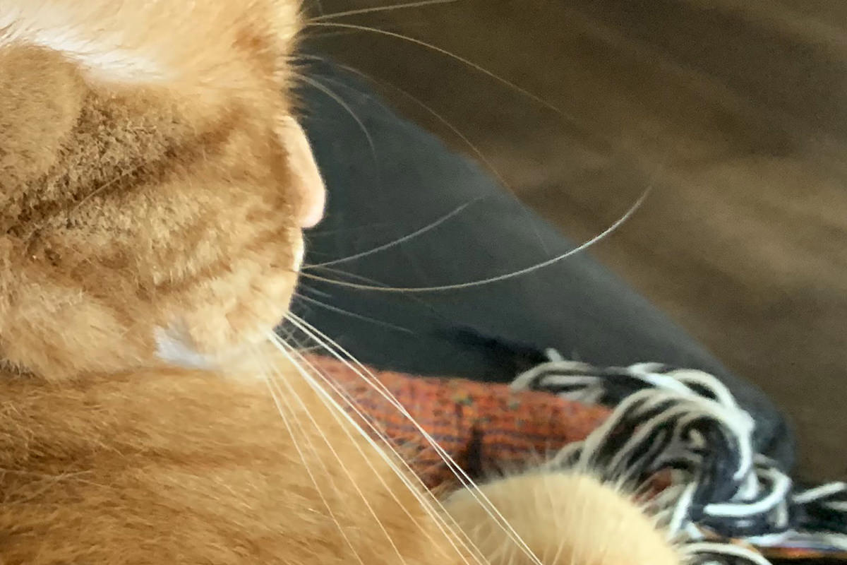 Jenny and her floopy whisker.