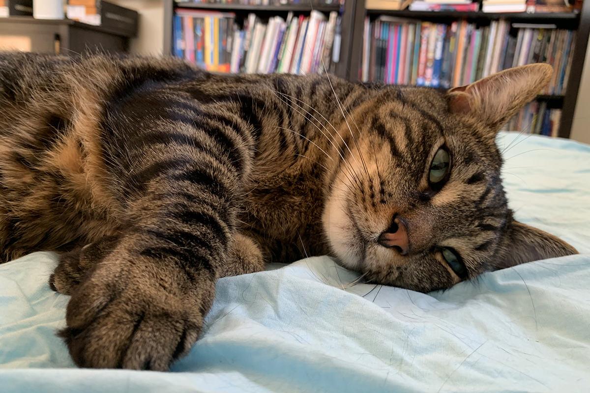 Jake looking adorable while sleeping.
