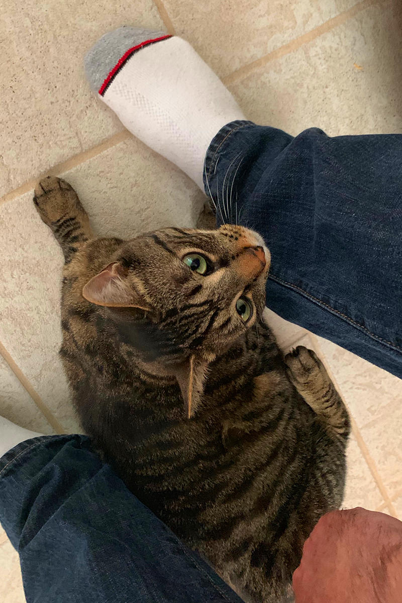 Jake the cat hovering around my feet while.