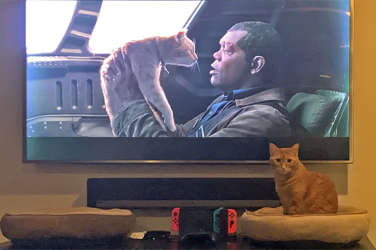 Jenny, an orange cat, sitting in front of the television looking at me as Samuel L. Jackson lifts up Goose, an orange cat, in the movie Captain Marvel.