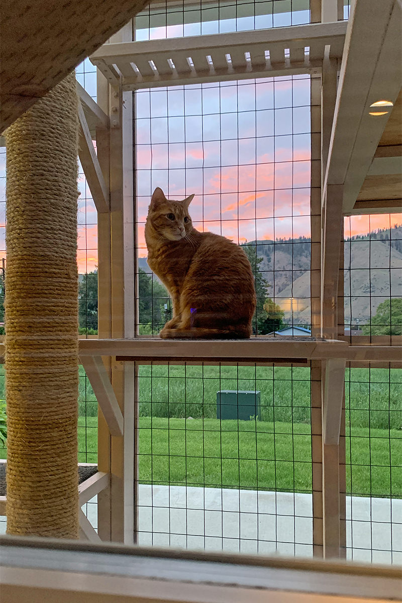 Jenny at Sunset in the Catio!