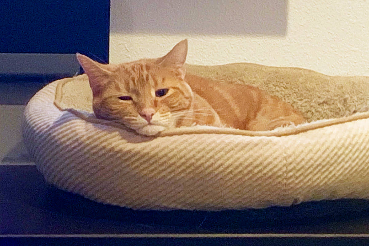Jenny waking up in her cat bed with her little adorable frowny-face.
