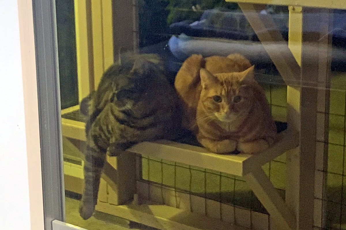 Jake and Jenny out in the catio together in the dark.