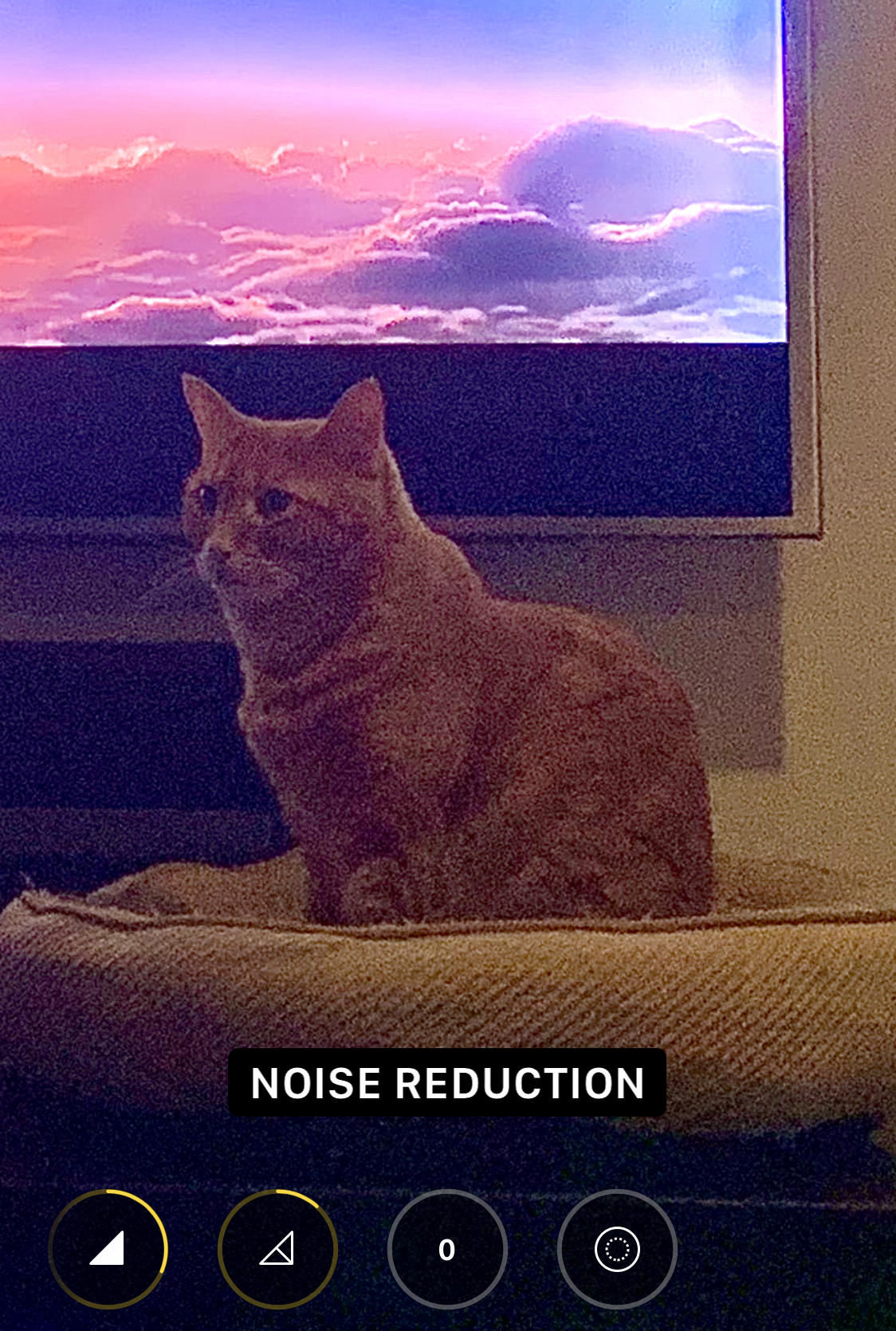 My cat Jenny sitting in front of a television with noise all over her.