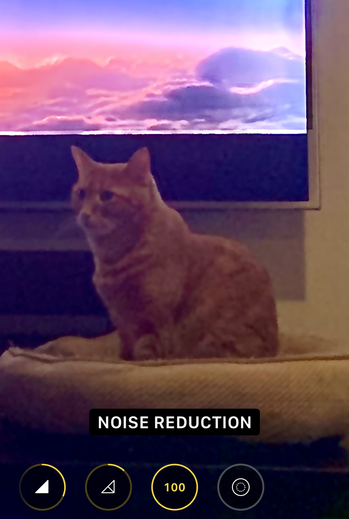 My cat Jenny sitting in front of a television, but she's blurred.