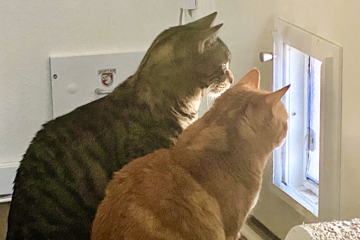 Jake and Jenny looking out the door flap to the catio.