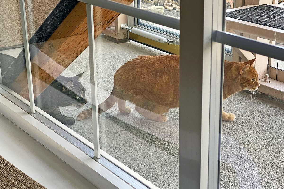 Jake has joined Jenny out in the catio to stalk the quail.
