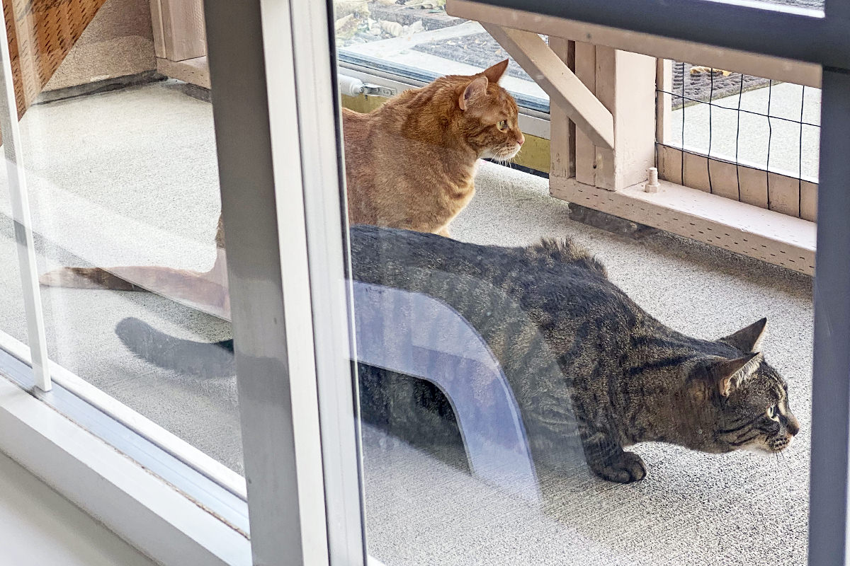 Jake and Jenny out in the catio looking very serious about stalking the quail.