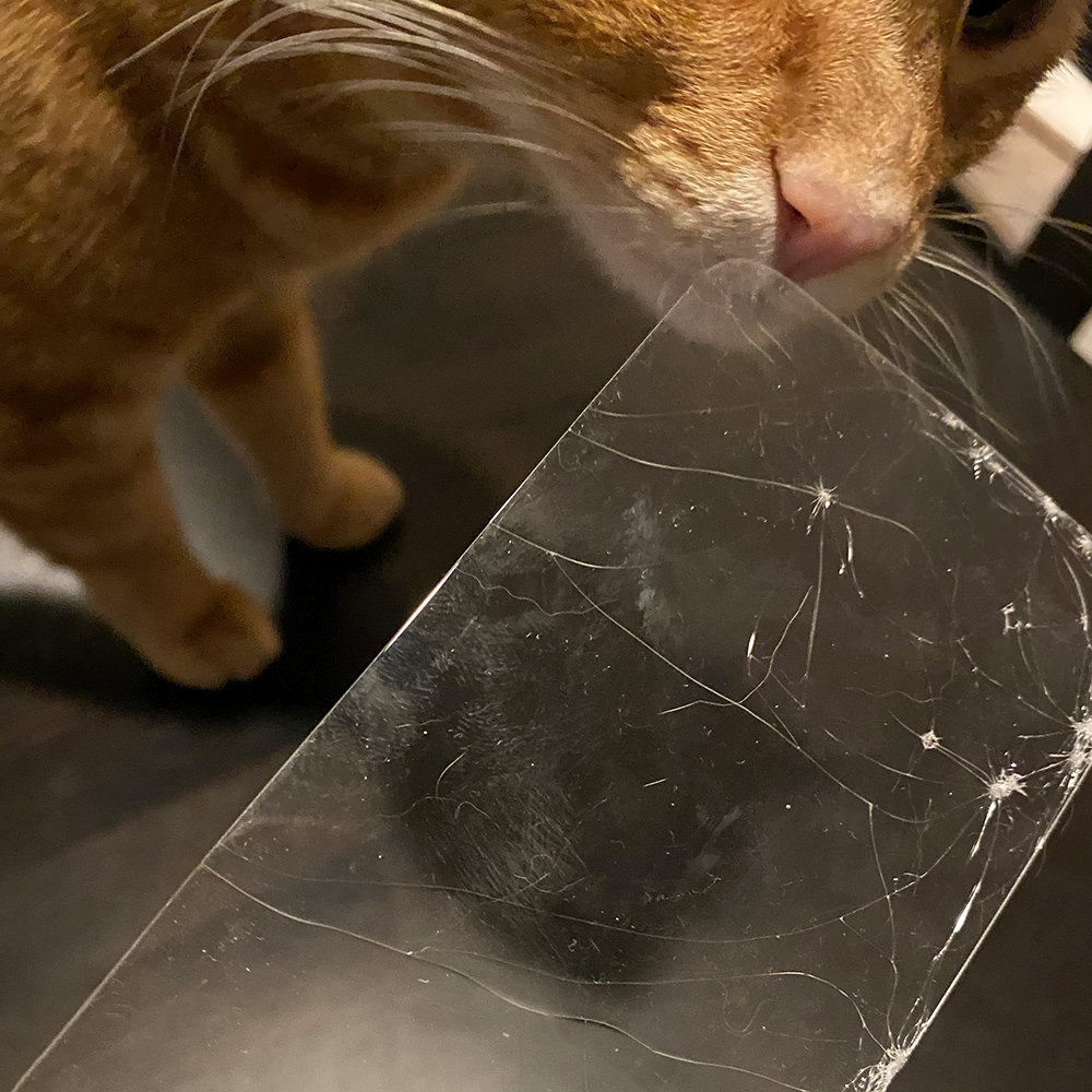 My cat Jenny examining the totally busted screen protector for my iPhone.