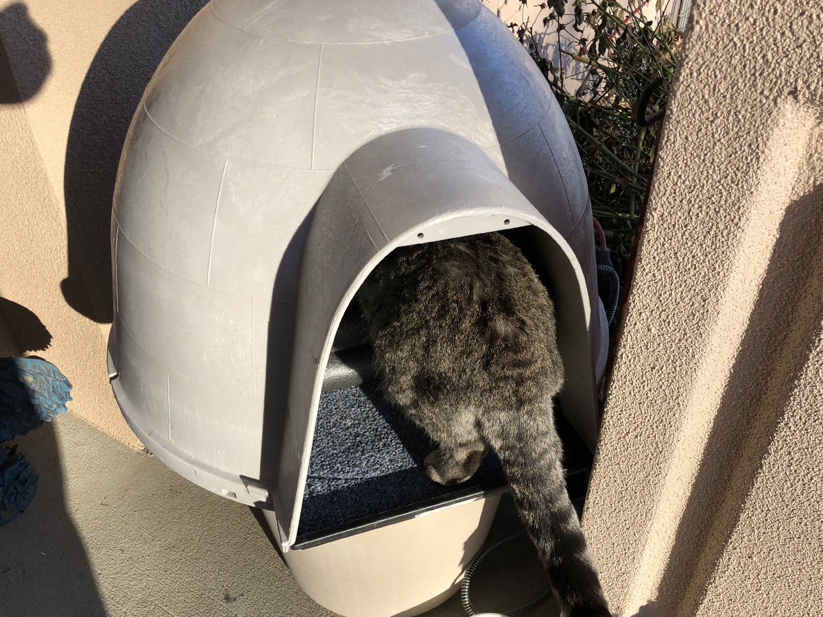 Fake Jake the Cat crawling into his domed cat shelter.