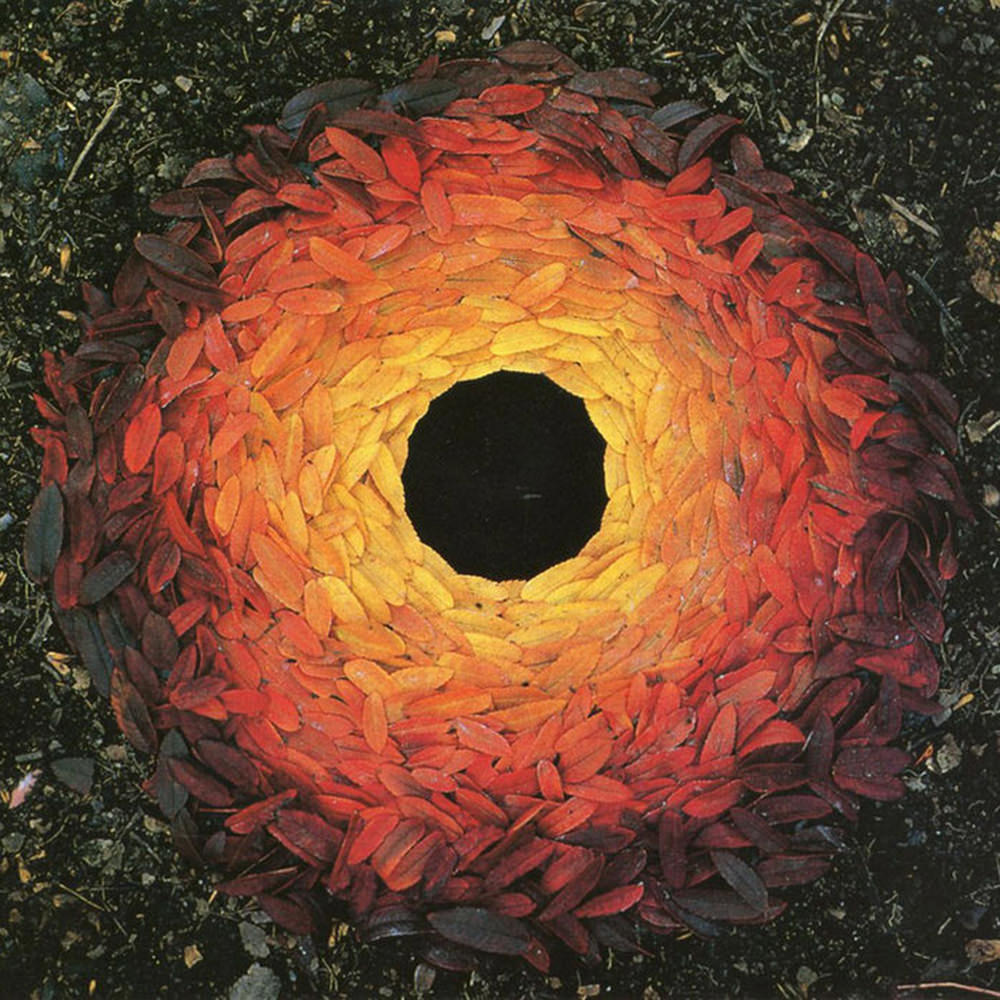Leaves spiraling in a circle from brown to red to orange to yello.