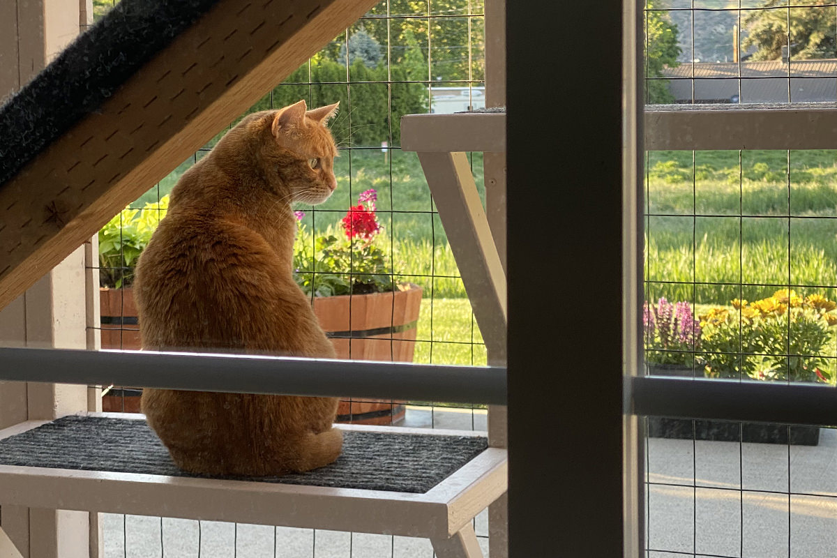 Jenny looking out from the catio to the flowers planted on the patio.