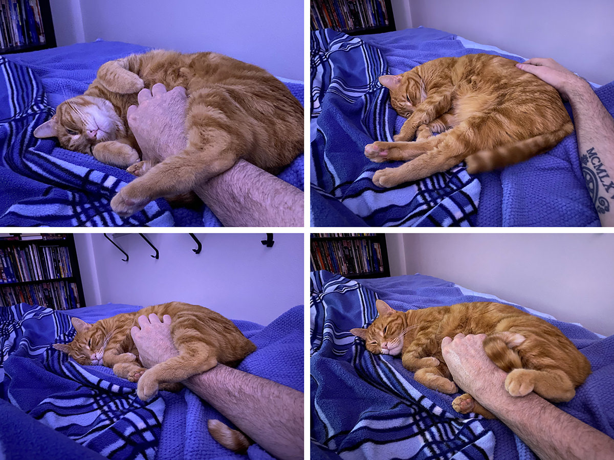 Four images of Janny sleeping