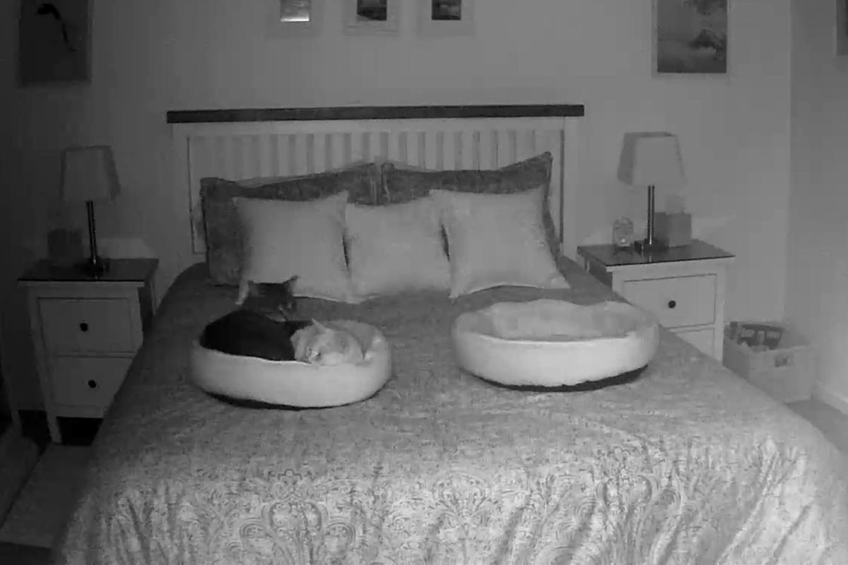 A night vision photo of Jake and Jenny curled up in the same kitty bed.