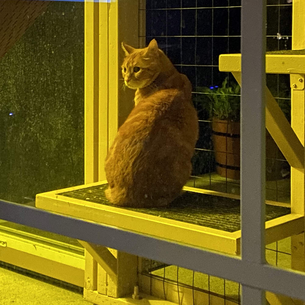 Jenny in the catio out in the dark.