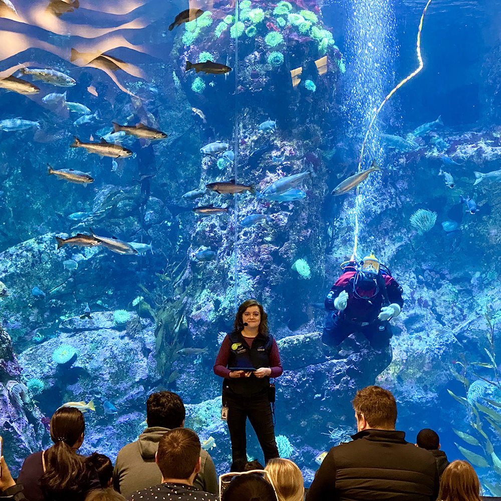 A woman standing in front of a massive fish tank with a diver inside giving a lecture to a group of people.