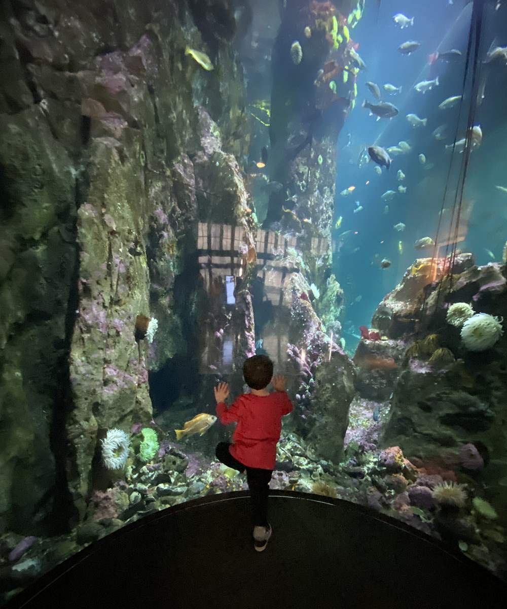 The grand-nephew standing in front of a huge floor-toceiling tank looking at fish.