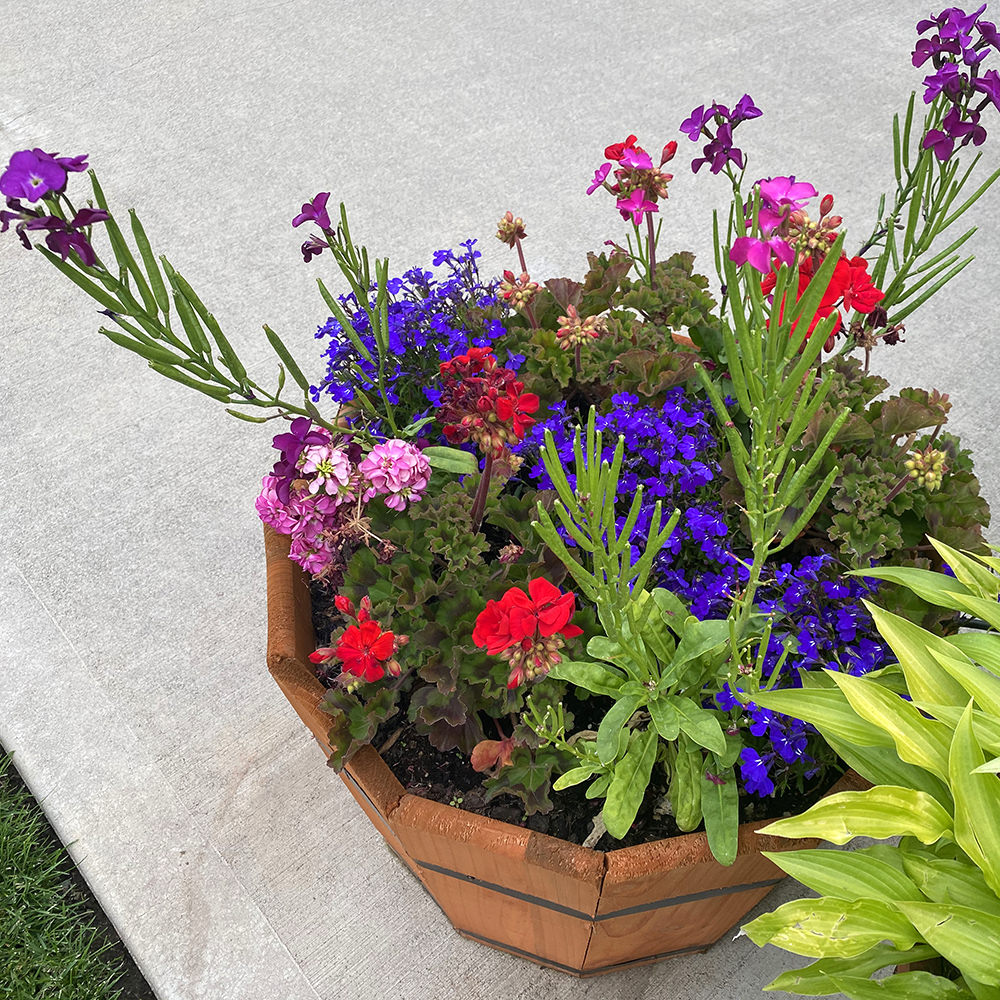 A planter filled with a variety of different flowering plants in a bunch of different colors.