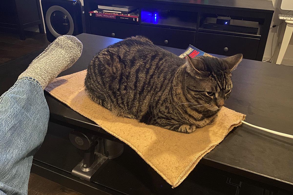 Jake has stolen my heating pad.