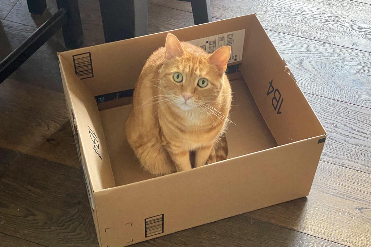 Jenny sitting in a cardboard box.