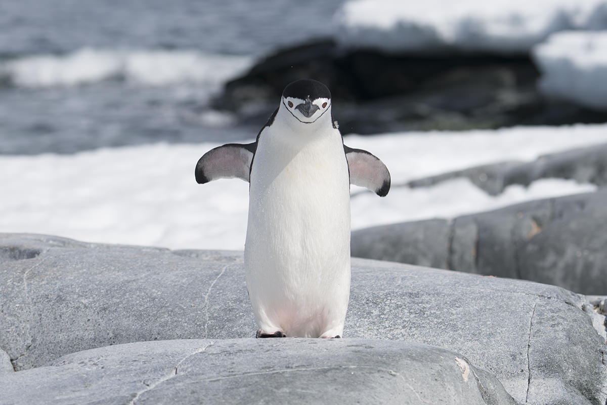 Penguin come to see me.
