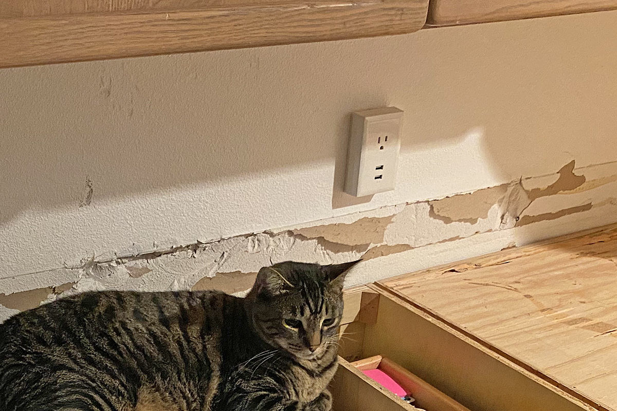 Jake the Cat sitting in front of huge chunks torn out of my kitchen wall.
