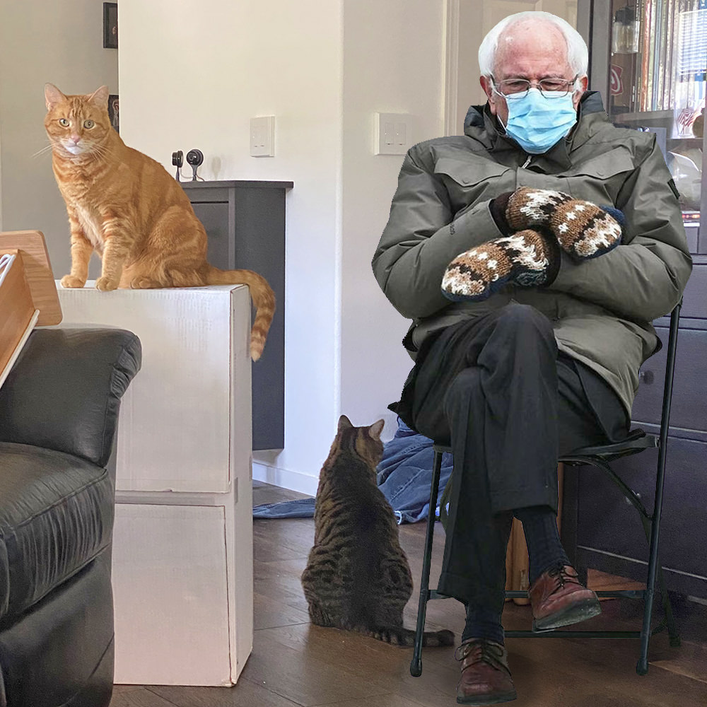 Bernie Sanders sitting in a folding chair with a mask and gloves in my living room while my cats Jake and Jenny are sitting nearby.