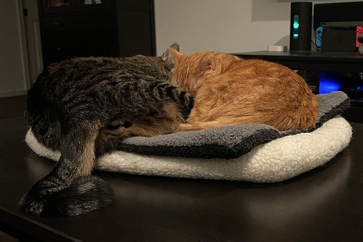 Jake and Jenny sleeping together in a kitty bed.