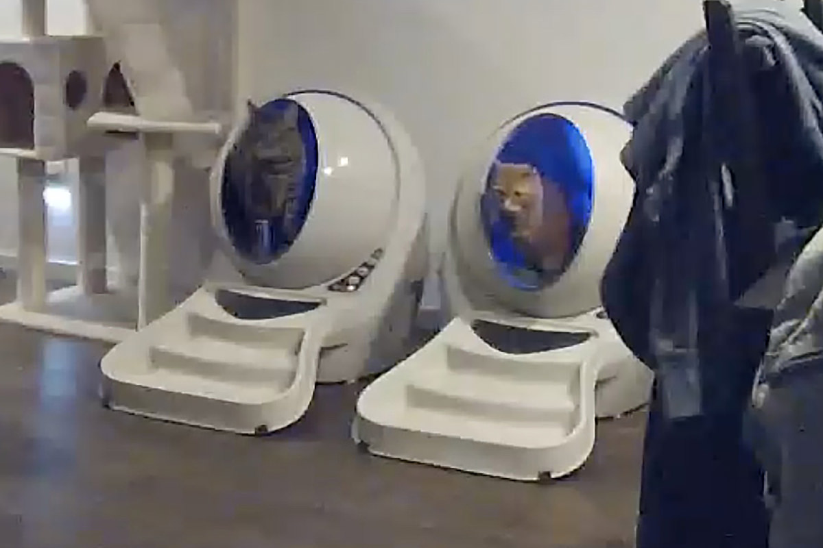 Jake and Jenny sitting in the Litter-Robots