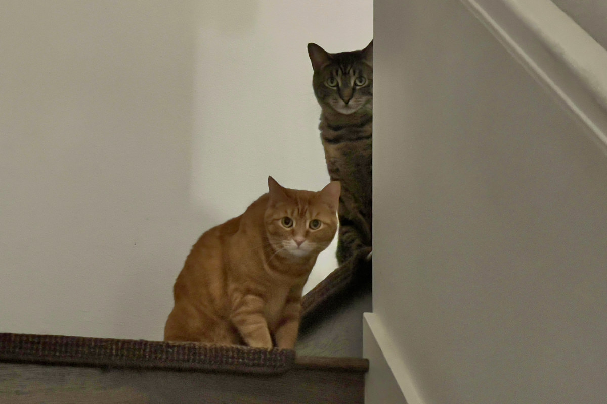 Jake and Jenny peer cautiously down the stairwell.
