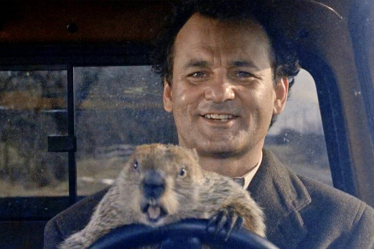 Don't drive angry, groundhog! Don't drive angry.