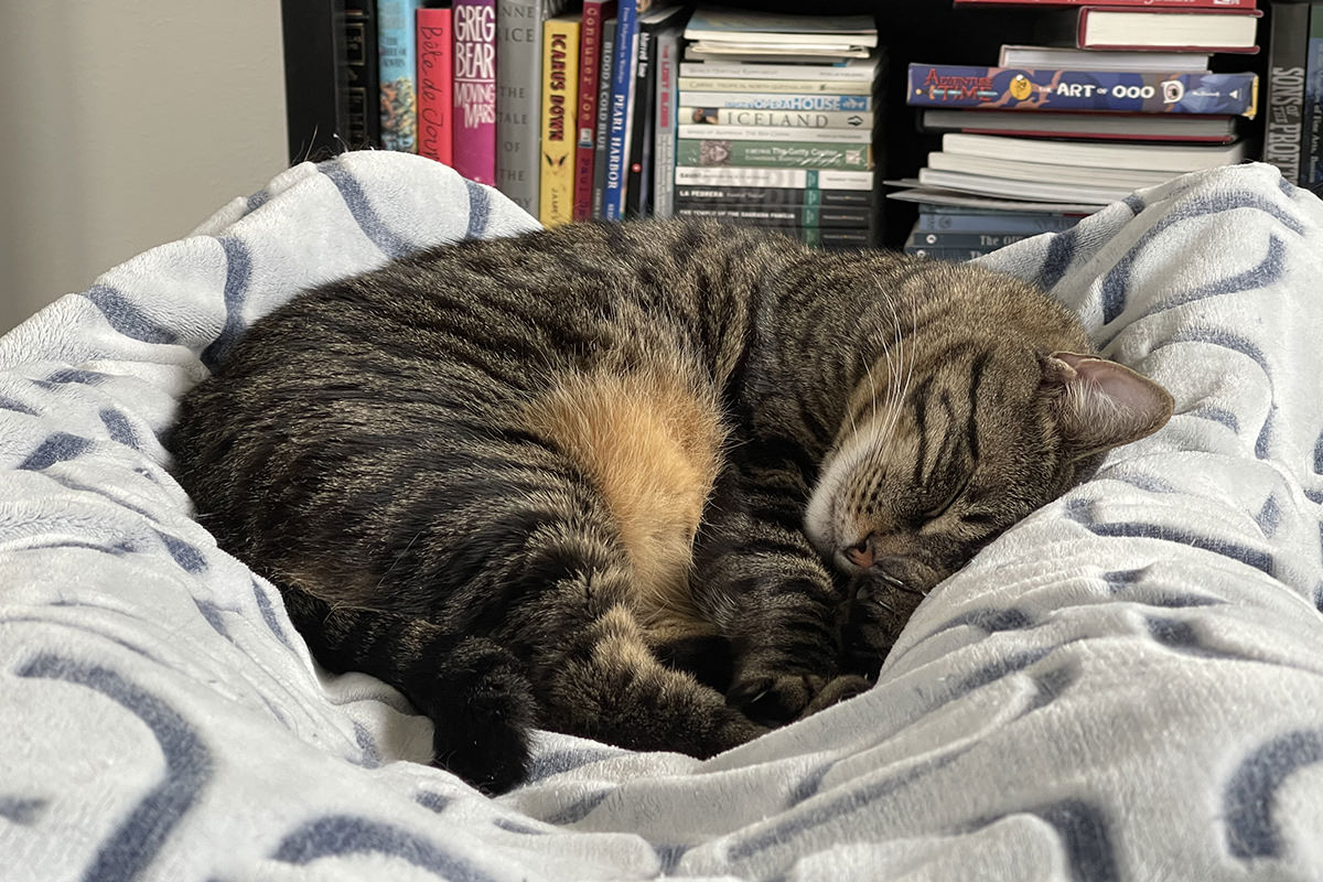 Jake asleep in-between my feets.