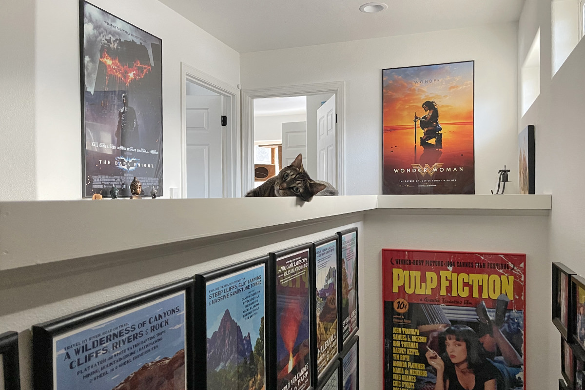 Jake looking at me from the ledge as he lays there looking lazy... my Marvel movie posters are on the walls.