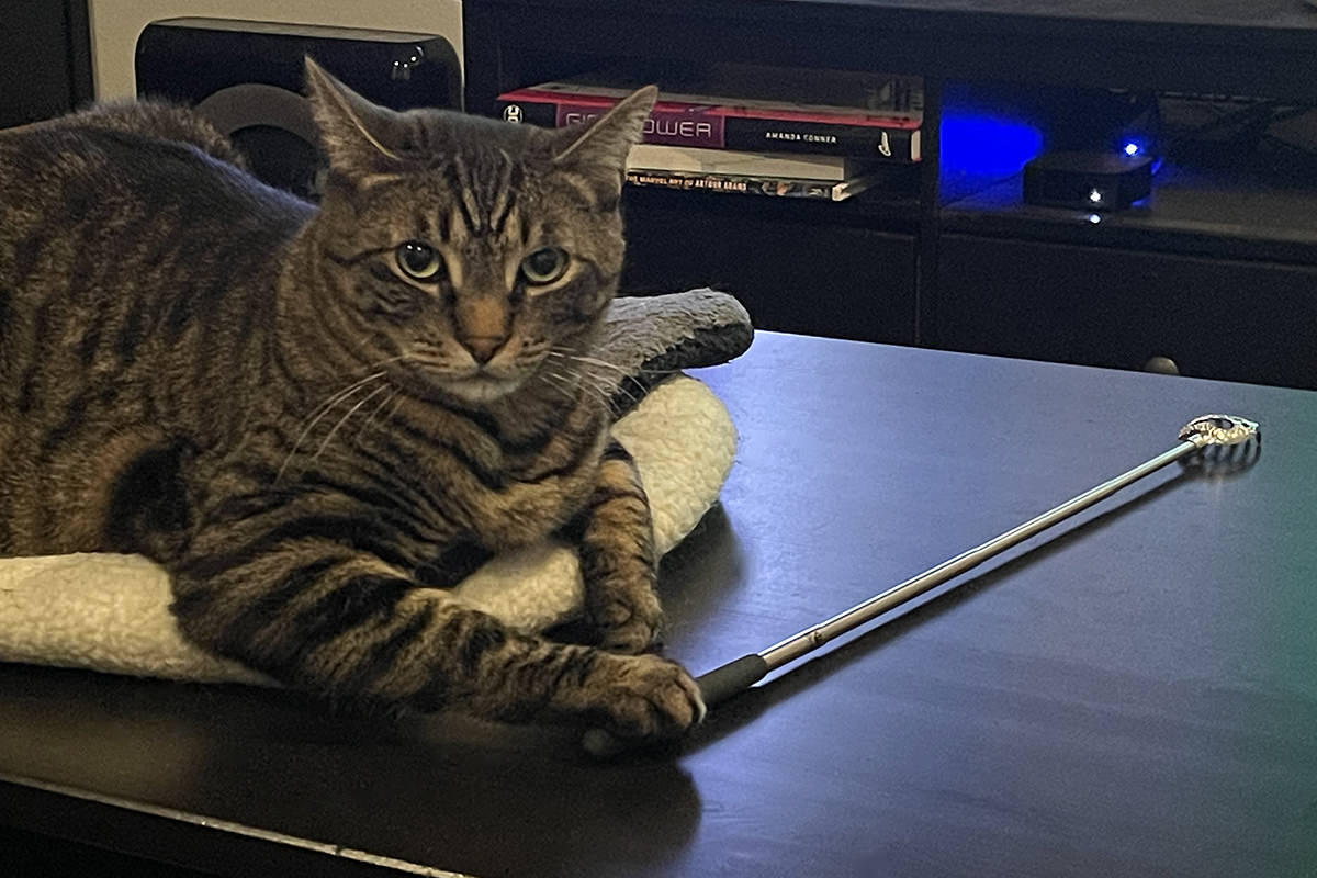 Jake sitting in a cat bed on the coffee table with one paw resting on the handle of a back scratcher.