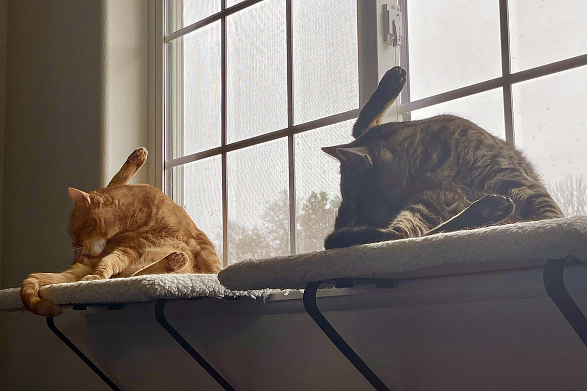 Jake and Jenny licking their butts on the window perches in perfect harmony.