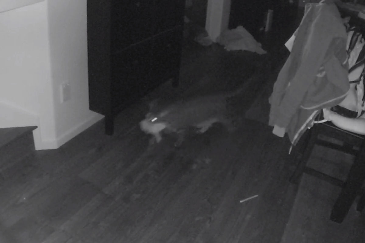 Jake carrying Mufasa upstairs as seen by the security camera.