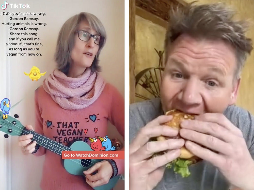 That Vegan Asshole being an asshole in a TikTok duet with Chef Gordon Ramsay