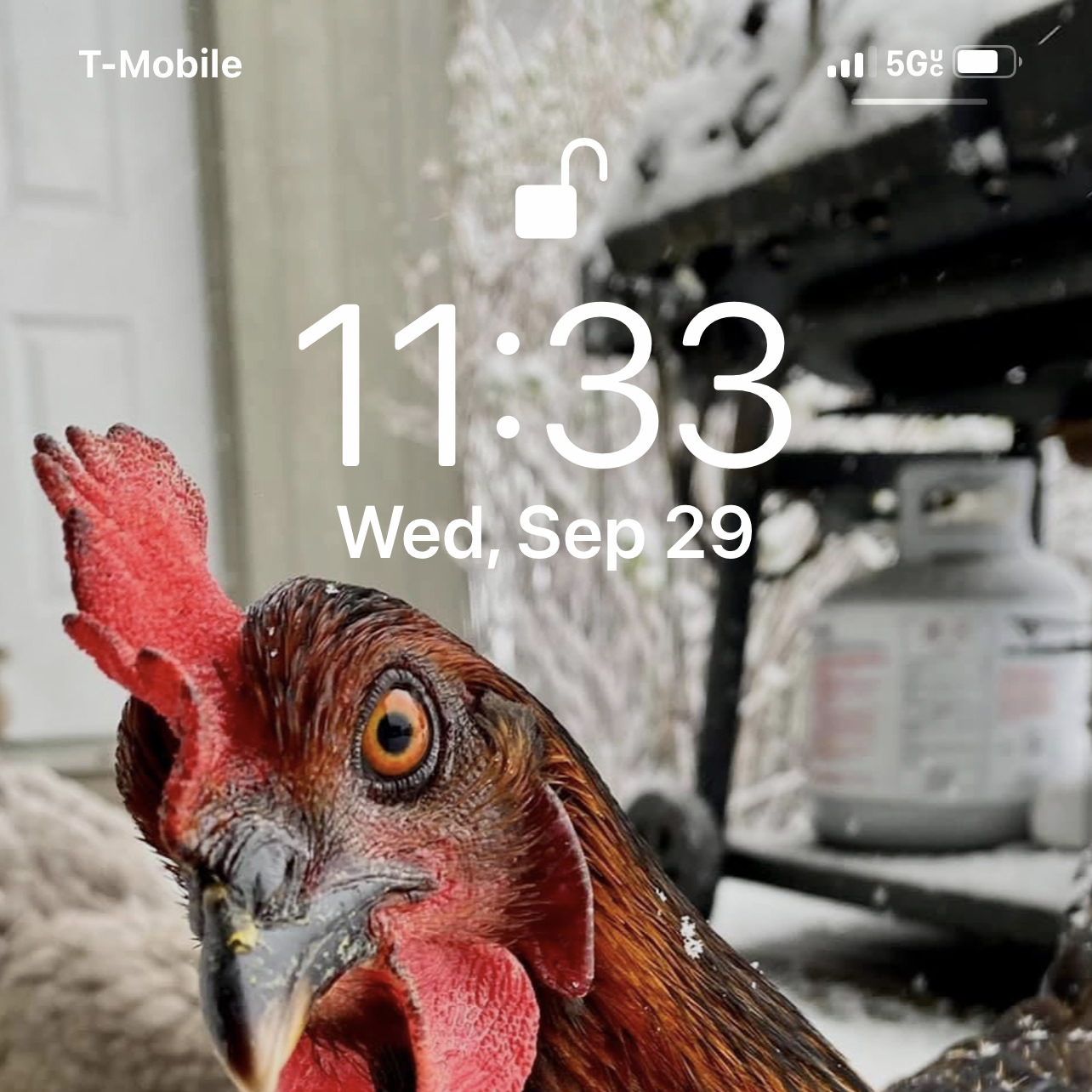 My phone lock screen as a chicken with 5GUC in the upper corner.