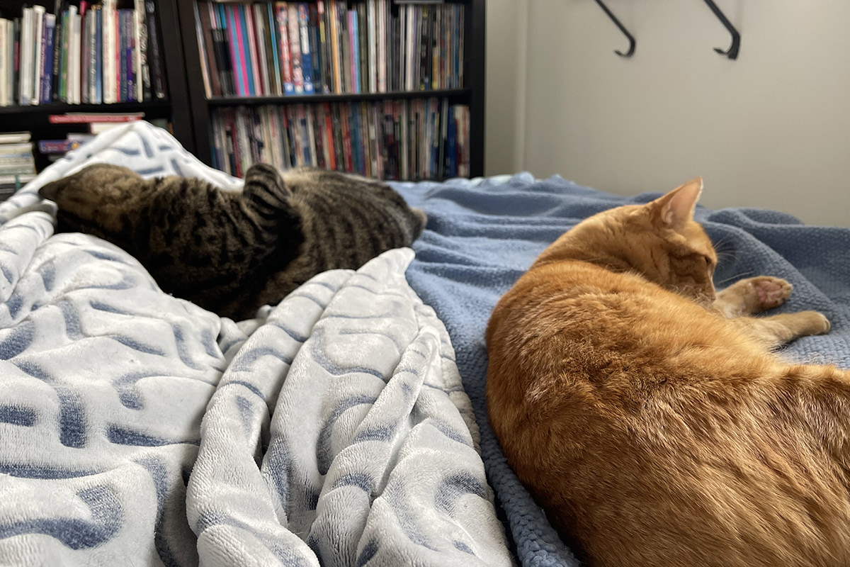 Jake and Jenny lounging with me on the bed.