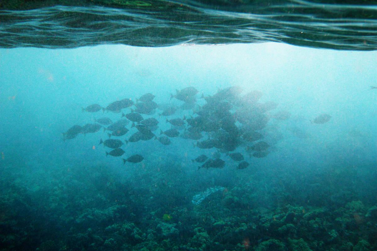 Underwater fishies!