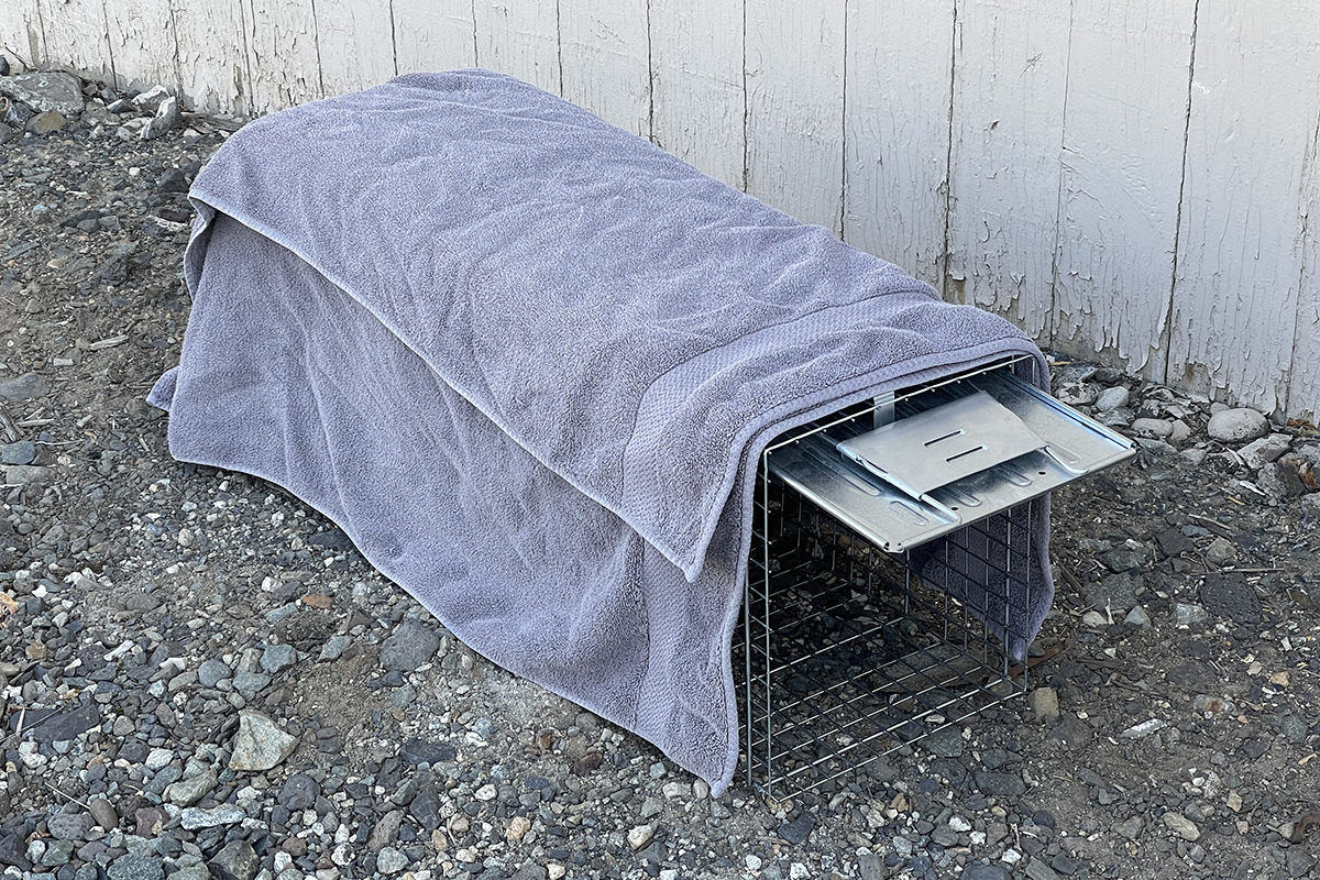 Towels covering the cage trap.