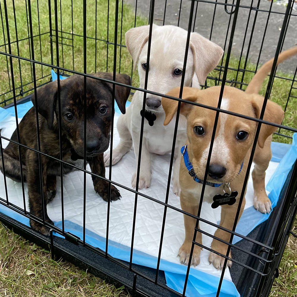 Puppies in a crate!