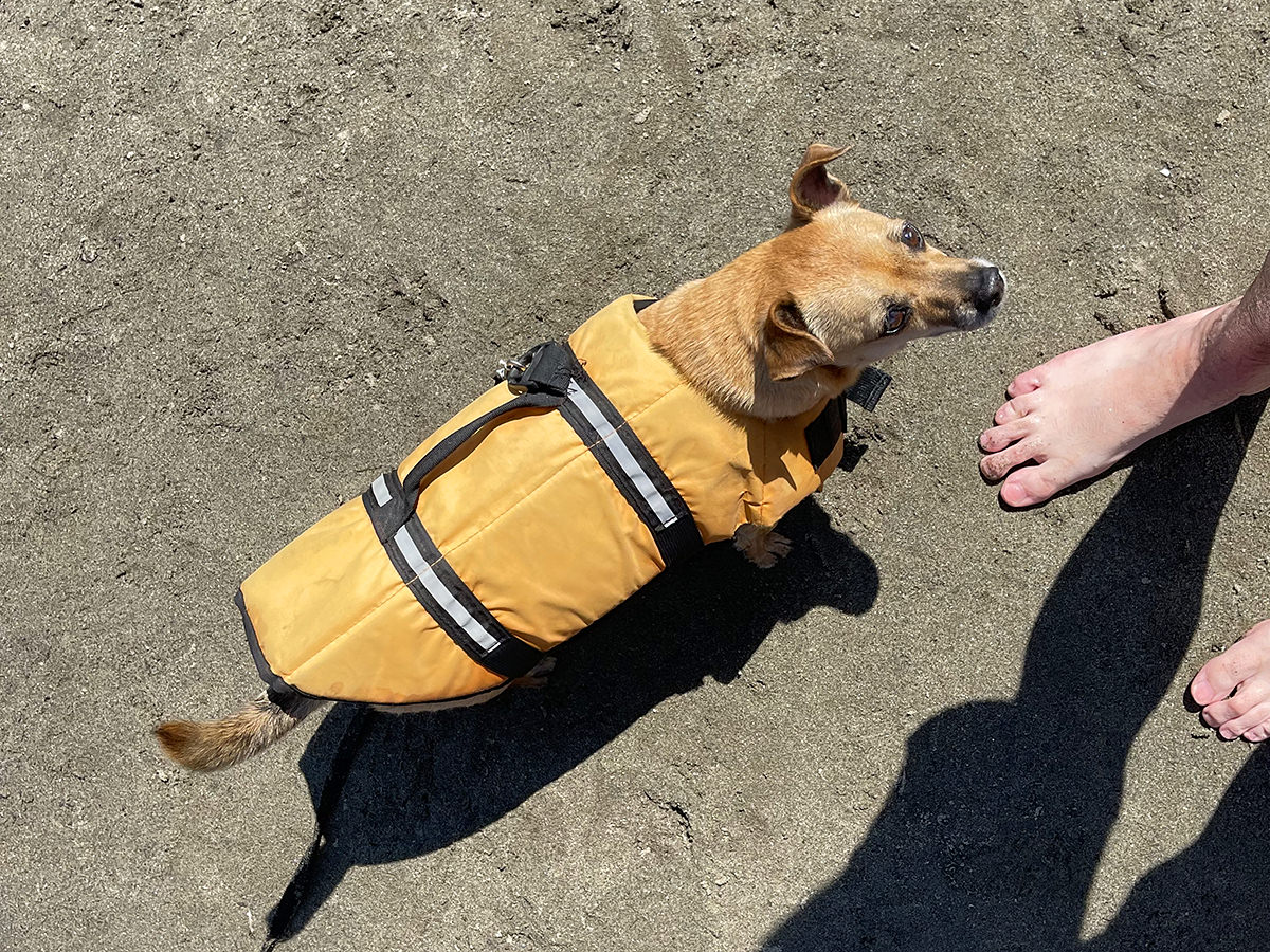 A puppy in a life vest at my feet.