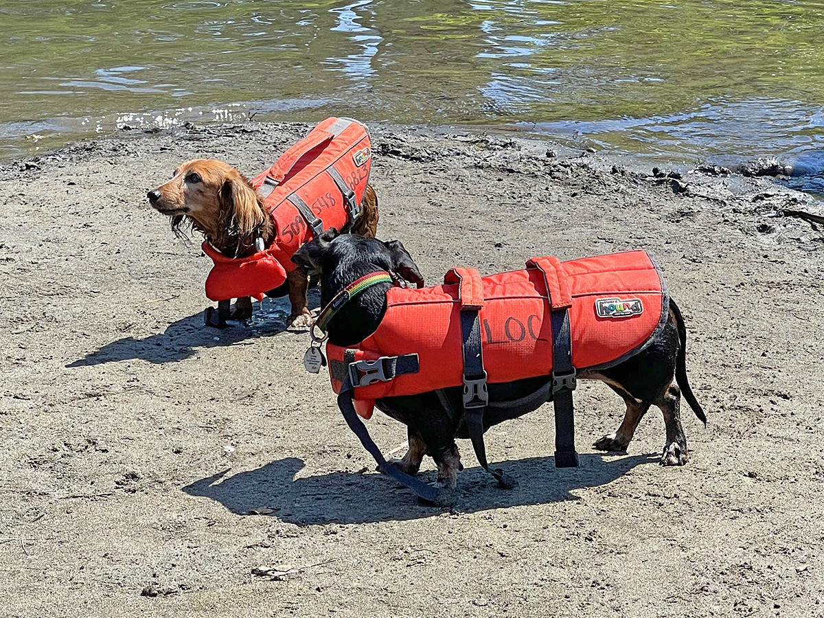 Two puppies in life vests.
