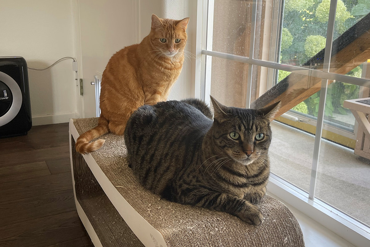 Jake laying on the scratcher lounge while Jenny sits.